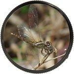 Вид в окуляр трубы для наблюдений за насекомыми