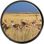 Зрительные трубы с широкопольным окуляром применимы для наблюдений за стадными животными