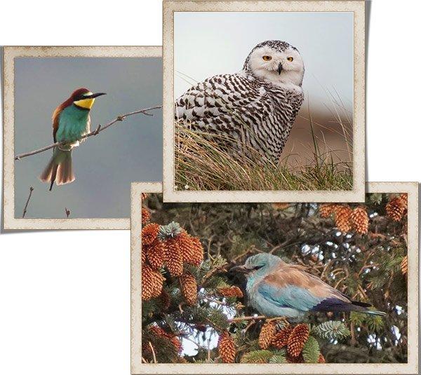 Раздел Подзорные трубы для наблюдений за птицами