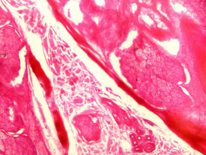 Кожа человека под микроскопом Sigeta Biogenic: кратность 100x, зеркальный фотоаппарат Canon 600D