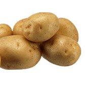 Генная модификация с помощью Agrobacterium сделала картофель несъедобным для жука
