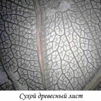 LEVENHUK DTX 720 WiFi Цифровой микроскоп