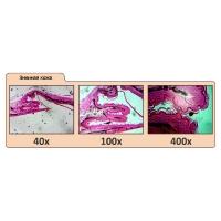 CELESTRON 40x-400x LCD Digital II Цифровой микроскоп с гарантией