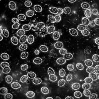 DELTA OPTICAL GENETIC PRO BINO USB (A) 40x-1000x Микроскоп