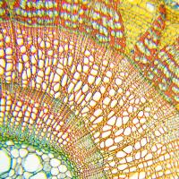 DELTA OPTICAL BIOLIGHT 100 (белый) Микроскоп