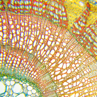 DELTA OPTICAL BIOLIGHT 100 40x-400x (белый) Микроскоп