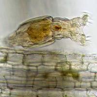 DELTA OPTICAL ProteOne 40x-1000x Микроскоп с гарантией