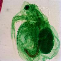 LEVENHUK 2ST Микроскоп купить в Киеве